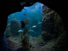 underwater cave pic | cave, sea, underwater, water - image #204631 on Favim.com