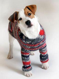 Neule koiralle Dog Pattern, Catio, Beagle, Chihuahua, Dog Cat, Colours, Knitting, Crochet, Diy