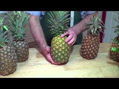 How to tell when Pineapples are ripe.