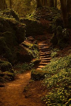 forest path forest stairway, puzzlewood, near coleford in the forest of dean, england Foto Nature, All Nature, Amazing Nature, Forest Of Dean, Forest Path, Forest Fairy, Dark Forest, Beautiful World, Beautiful Places