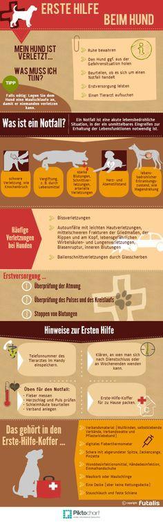 """Wichtige Informationen zum Thema """"Erste Hilfe beim Hund"""" - Verhaltensregeln für den Notfall: http://futalis.de/blog/erste-hilfe-beim-hund #ErsteHilfe #Hund"""