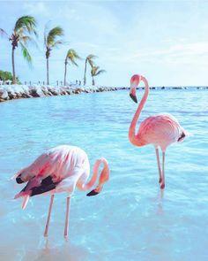 "@followmefaraway auf Instagram: ""Flamingo Beach Renaissance Aruba Private Island. Photo by @erubes1 #followmefaraway"""