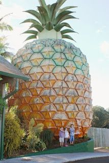 The big pineapple, Queensland, Australia The Places Youll Go, Places To See, Places To Travel, Places Ive Been, Tropical, Australia Travel, Queensland Australia, Roadside Attractions, Pineapple