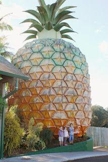 The big pineapple, Queensland, Australia