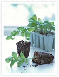growing herbs tips and tricks