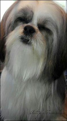 Hondje met lang haar