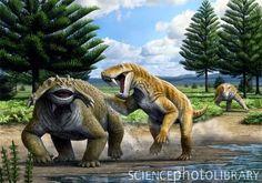 BioOrbis: Os Ancestrais dos Tigres Dentes de Sabre