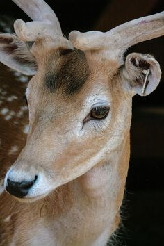 Anna Matveeva Photograph - Handsome Deer by Anna Matveeva