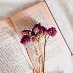 Bobby Pins, Hair Accessories, Books, Beauty, Instagram, Mariana, Libros, Book, Hairpin