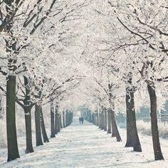 Arbres en hiver.