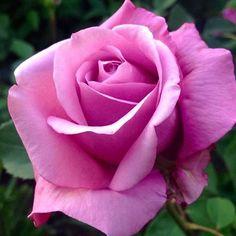 Para mi querida hermana ROSITA  epd 11/11/16 amb dolor i amor jordi Ruzafa