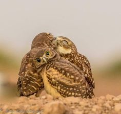 13 The Great Finalists Of The Comedy Wildlife Photography Awards 2017
