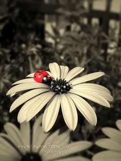 i love ladybugs! <3