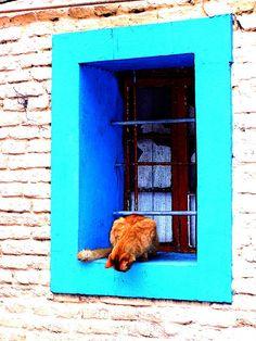 curious windows cats blue aqua turquoise color