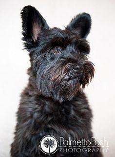 Dogs_0310-copy by beth schmidt17, via Flickr