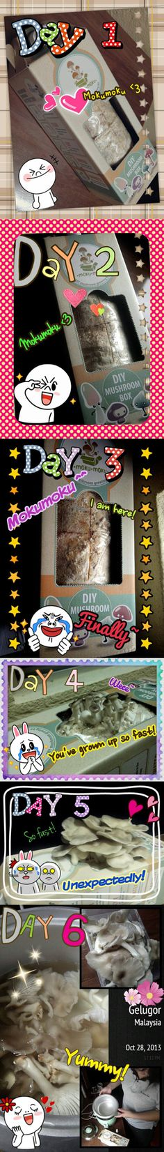 Yap Yi Hui's mushroom growing journey.  We can feel her excitement in the collection she posted on fb. Greenie thumbs up!  - mokumoku.my