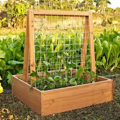 Give climbing plants a solid foundation with this fir-wood planter, featuring a thin wire trellis.
