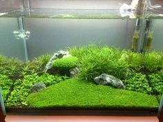 Post your shrimp tanks!                                                                                                                                                                                 More