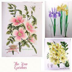 From The Kew Garden Gardens Book Thekewgardens Bayan Boyan Colorindolivrostop