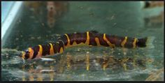 aquarium for all fish blogspot: Beautiful Fish 2017#Fish #FishTank #TropicalFish #Fishing #NomCat #Salmon #Aquarium #Health #Food #Healthy #Seafood #Heart #HealthyLiving #FishTank #HeartHealth #Recipe #FlyFishing #TropicalFish #HealthyEating #Trout #Goldfish #Cooking #Water #Goldfish #Water #Saltwater #Vancouver #Dubai #NomCat #MontereyBayAquarium #SeaLife #UAE #fish #aquarium #fishtank #swim #swimming #water #coral #reef #reeftank #tropical #koi #saltwater #freshwater #beautiful #ocean…