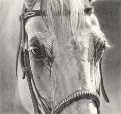 Equine Fine Art: Pencil, Charcoal & Pastel Horse Drawings (Dunway…