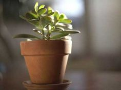 The 15 easiest indoor house plants that won't die on you The Easiest Indoor Plants That Wont Die On You - iVillage Take a look through our best and easy indoor plants guide. See which indoor plant variety will work best with your home decor.