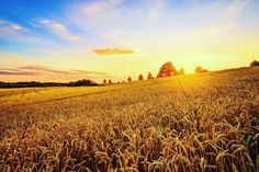 #sky #sun #sunset @top.tags #toptags #sunshine #sol #red #sunsets_oftheworld #twilightscapes #sky #clouds #sunset_pics #sunsetsniper #ig_sunsetshots #all_sunsets #igsunset #orange #instasunsets #sunset_vision #super_photosunsets #ig_sunset #sunrays #sunsetlovers #sungoesdown #scenicsunset #sunsetoftheworld #sunbeam #world_globalsky #sunsetvision #clouds