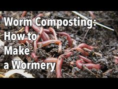 Worms help recycle food scraps into valuable compost to grow plants! Learn more--and how to set up a worm bin! Composting At Home, Worm Composting, How To Make Compost, Garden Compost, Garden Soil, Old Farmers Almanac, Kitchen Waste, Liquid Fertilizer, Garden Planner
