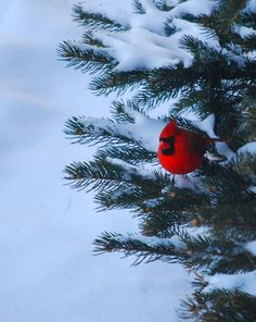 Seeing a bright spot in the form of a cardinal against the winter landscape....