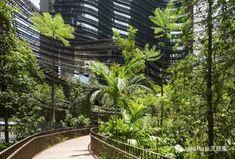 Marina One, Singapur - arquitectura: Ingenhoven Architects; paisajismo: Gustafson Porter + Bowman - foto: H G Esch Contemporary Landscape, Urban Landscape, Landscape Design, Mix Use Building, Green Building, Wooden Walkways, Landscaping Near Me, Landscaping Software, Landscape Architecture