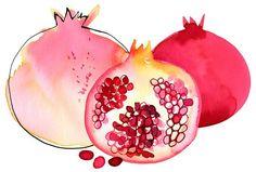 Watercolor Illustration, Watercolor Paintings, Fruit Illustration, Watercolours, Pomegranate Art, Pomegranate Tattoo, Fruits Drawing, Art Aquarelle, Fruit Art