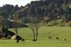 Avestruces del Parque de la Naturaleza de Cabarceno | Cantabria | Spain