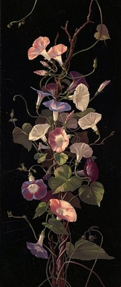 Morning Glories  Hardy, Annie Eliza, 1839-1934