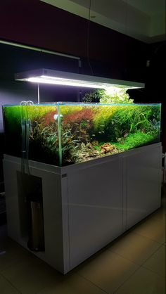 aquascape planted tank large JBL