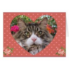 Valentine's Kitty Card - valentines day gifts love couple diy personalize for her for him girlfriend boyfriend