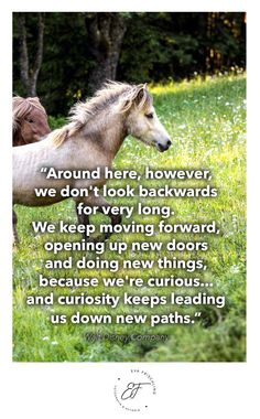 """""""Around here, however, we don't look backwards for very long. We keep moving forward, opening up new doors and doing new things, because we're curious...and curiosity keeps leading us down new paths."""" ― Walt Disney Company Quote - Zitat - of the day - horse - iceland"""