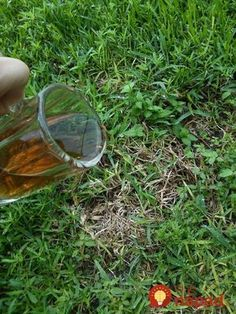Easily Getting Rid of Dead Spots on Your Lawn, Effortlessly! Easily Getting Rid of Dead Spots on Your Lawn, Effortlessly!: With one easy and pet safe item, you can get rid of dead brown dry spots on grass caused by pet urine. Read on for the big surprise! Grass Edging, Lawn Edging, Rock Garden Plants, Lawn And Garden, Indoor Garden, Garden Art, Garden Design, Lawn Repair, Gardens
