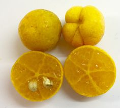 Eremorange, a natural hybrid of the Australian desert lime and an orange. Small fruits but extremely flavourful