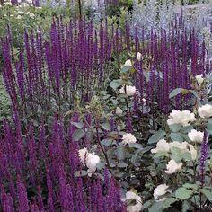 Perenner som blommar hela sommaren Plants, Backyard Garden, Planting Flowers, Perennial Garden, Perennials, Naturalistic Garden, Indoor Flowers, Garden Planning, Outside Plants
