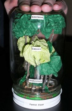 use this concrete example to physically show the different levels of the rain forest.