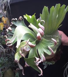 If you have heard of hydroponics or other methods of growing plants without soil and want to try it out at home, you can. Hydroponics is easy to care for and Small Indoor Plants, Air Plants, Unusual Plants, Exotic Plants, Rare Flowers, Unique Flowers, Growing Vegetables, Growing Plants, Platycerium