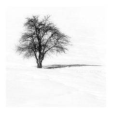 Black and White photography  Tree Nature Photography by gonulk, $30.00