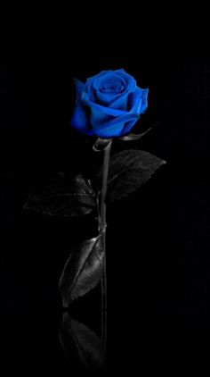 Wall paper blue flowers iphone 36 ideas for 2019 Black Flowers Wallpaper, Black Phone Wallpaper, Flower Background Wallpaper, Flower Phone Wallpaper, Beautiful Flowers Wallpapers, Rose Wallpaper, Galaxy Wallpaper, Beautiful Roses, Beautiful Wallpaper