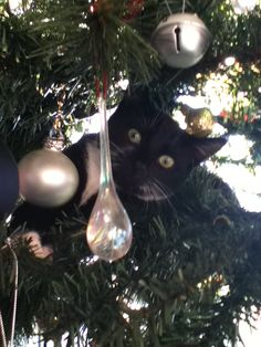 Winnie is up the Christmas tree again! Lol