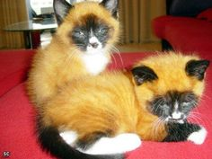 There is no ordinary cat/ They look like they're part fox. ll