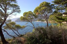 Rayol Canadel sur Mer - Tourisme Var Côte d'Azur