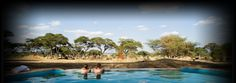 honeymoon <3  Swala Camp | Tarangire Safari Lodges | Sanctuary Retreats