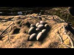 La formación de la Tierra Documental. - YouTube