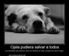 Ojala pudiera salvar a todos Los animalitos que quisiera, ellos se merecen lo mejor, porque nos dan lo mejor.