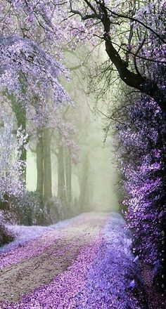 ✯ Beautiful, isn't it lovely! Mysterious and beautiful. Beautiful World, Beautiful Images, Beautiful Pictures Of Flowers, Trees Beautiful, Beautiful Things, Jolie Photo, Pathways, Pretty Pictures, Heaven Pictures